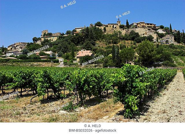 grape-vine, vine (Vitis vinifera), village with, France, Provence, Faucon