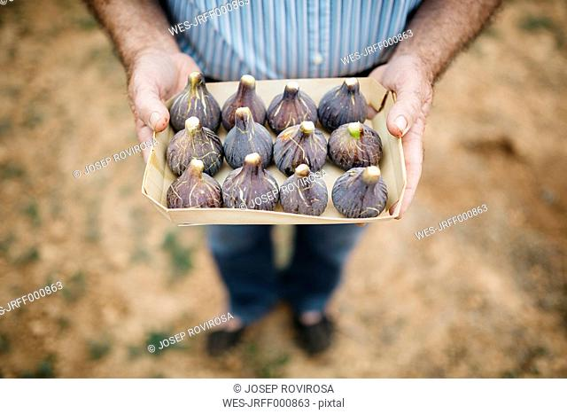 Senior man holding cardboard box of fresh figs