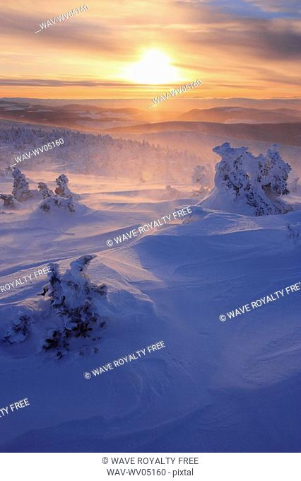 View of snow-covered trees and blowing snow from Mont Logan at sunrise, Quebec, Canada