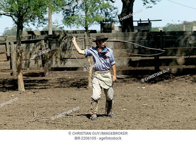 Gaucho throwing lasso, Estancia San Isidro del Llano towards Carmen Casares, Buenos Aires province, Argentina, South America