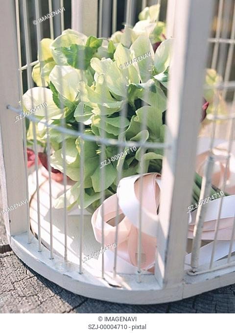 Bird Cage and Bouquet