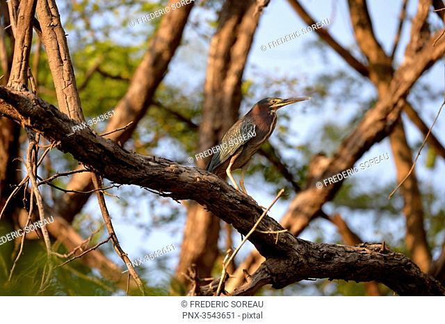 a bird in Rio Dulce, Guatemala, Central America