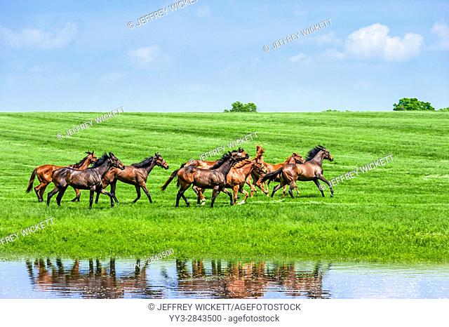 Running horses. Scenic highway in Franklin County, Kentucky, USA