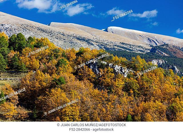 Cadi-Moixero Natural Park, Vansa i Fornols Valley, Alt Urgell, Lleida, Catalunya, Spain