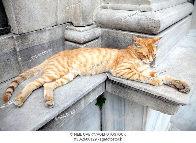 Sleeping Ginger Cat, Istanbul, Turkey