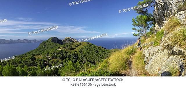 senda del Puig de Sa Talaia, área natural de la Victòria, Alcúdia, Mallorca, balearic islands, Spain
