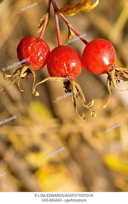 Three red berries