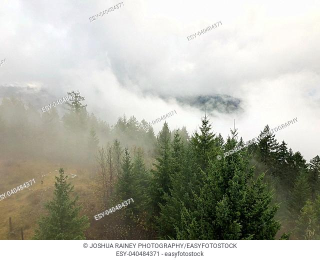 Trees and low lying clouds over the Umpqua National Forest in Oregon