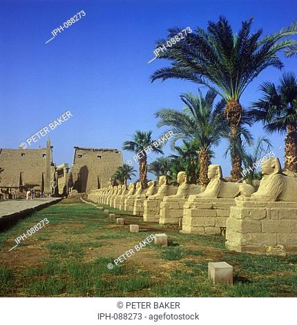 Sphinx's line the road leading to the Temple of Luxor, a large ancient Egyptian temple complex on east bank of the River Nile