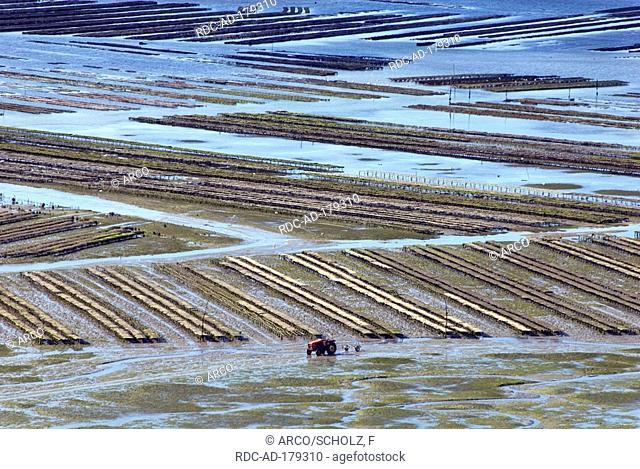 Mussel cultivation in wadden sea, bay Anse de Paimpol, Baie de Saint Brieuc, Brittany, France, mussel farm