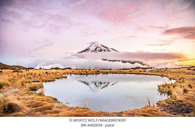 Reflection in Pouakai Tarn, stratovolcano Mount Taranaki or Mount Egmont at sunset, Egmont National Park, Taranaki, North Island, New Zealand