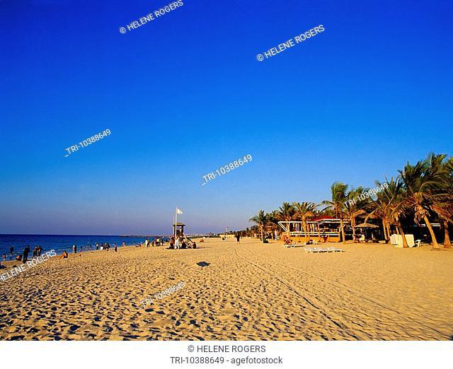 Dubai UAE Jumeira Beach Park Palm Trees & Sun Beds