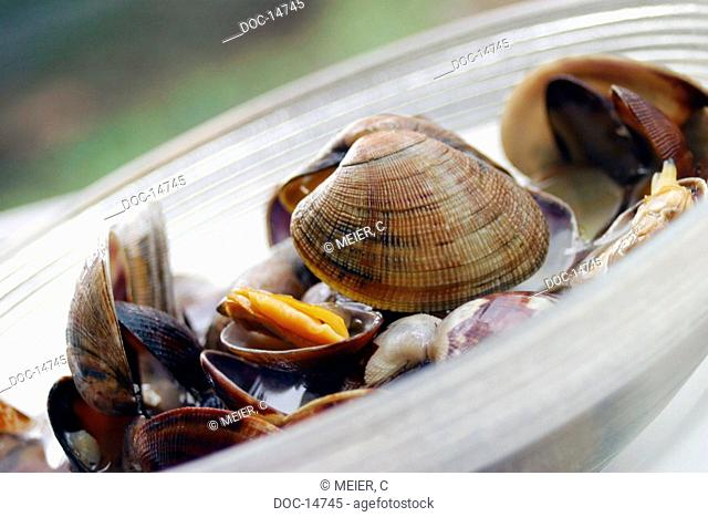 Clams - Sand mussels Vongole versace broadloom mussels - mussels -Bivalvia - Lamellibranchia - mollusks protected by an eggshell - ability with heavy metals as...
