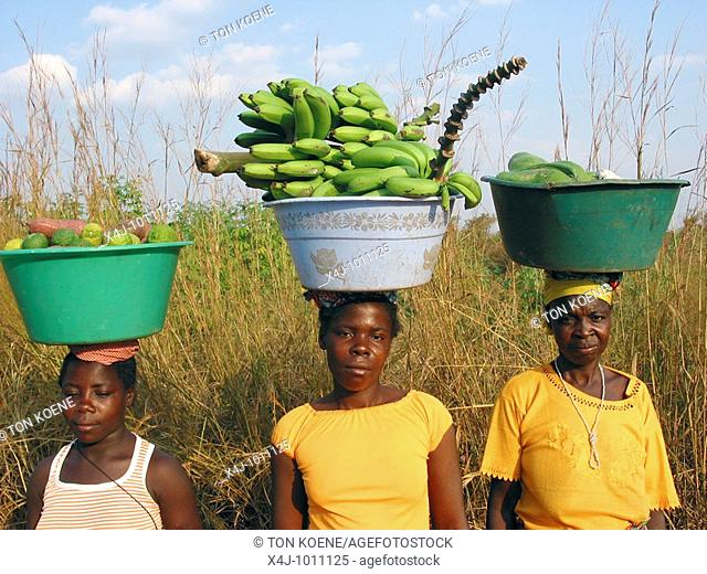 Women carrying fresh fruit on their heads in Angola  Feeding centres and other humanitarian aid were organised in Angola after widescale malnutrition during and...