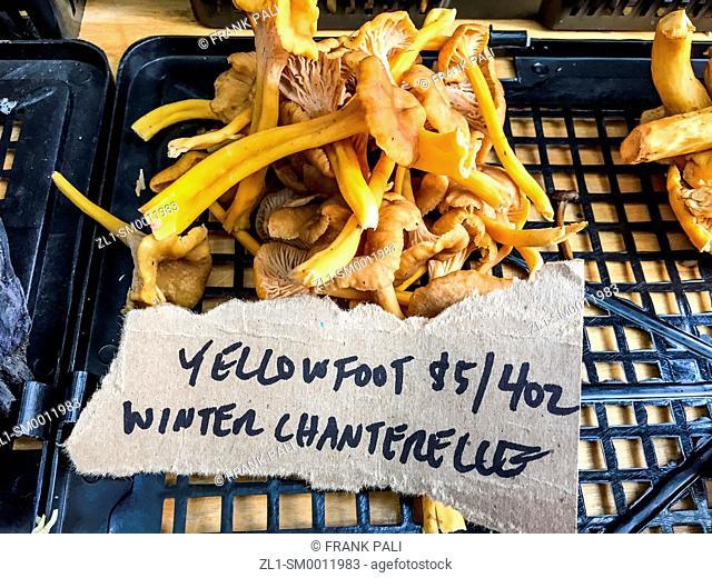 Winter Chanterelle Mushrooms