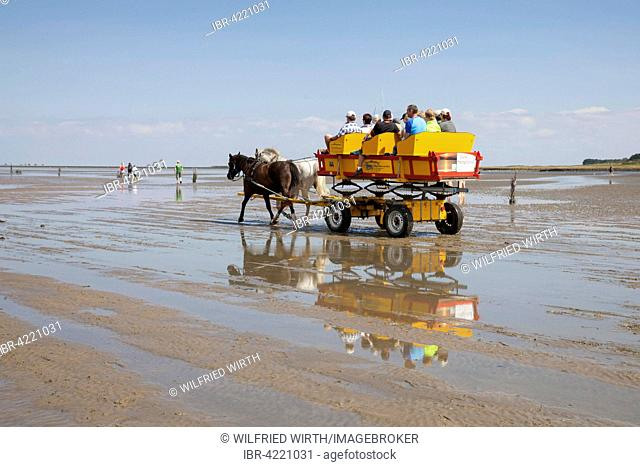 Horse-drawn carriage in the mud, Lower Saxon Wadden Sea National Park, Cuxhaven, Lower Saxony, Germany