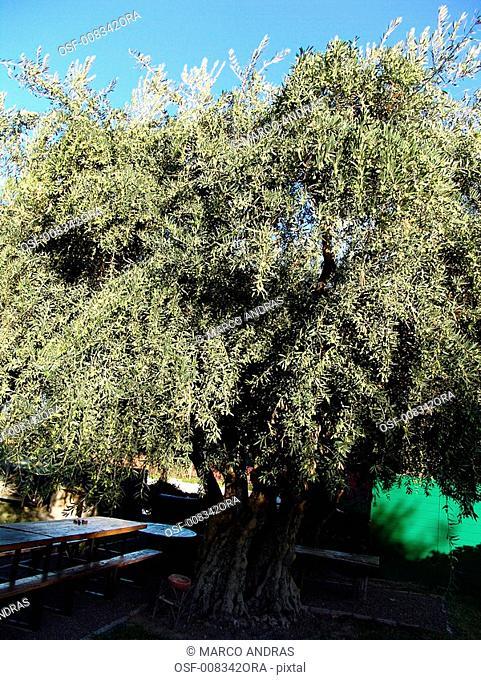 natural bothanical tree plantation