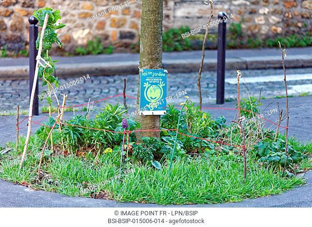 Vegetation tree legs in the city of Paris, France