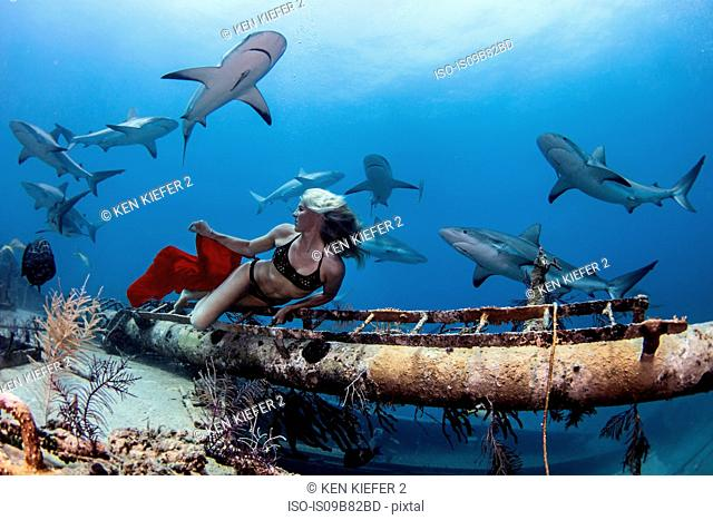 Underwater view of female free diver in bikini looking back at reef sharks, Bahamas