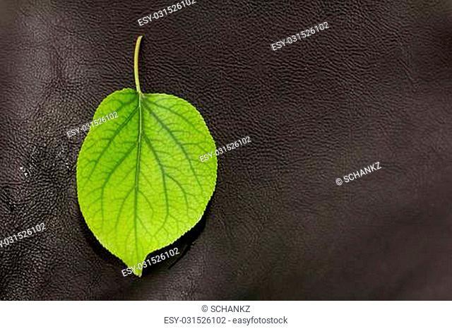 green leaf on a black leather background. macro