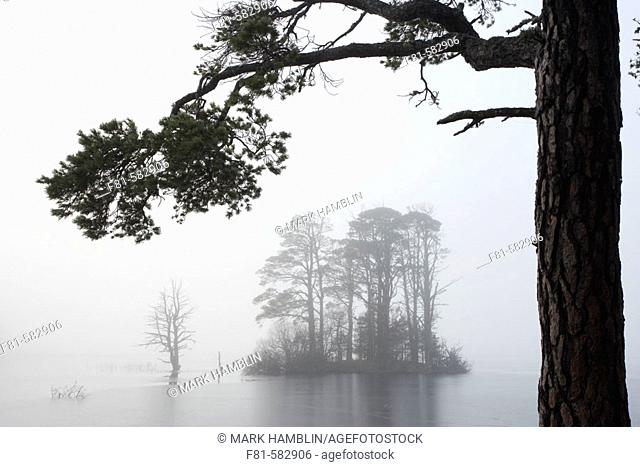 Loch Mallachie & Scots pines (Pinus sylvestris)  Abernethy Forest RSPB Reserve, Strathspey, Scotland. November 2005