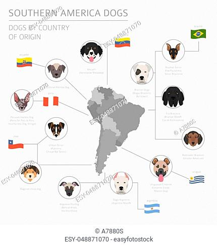 Dogs by country of origin. Latin american dog breeds. Infographic template. Vector illustration