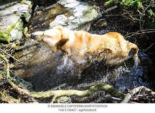 Dog gets a bath in a stream