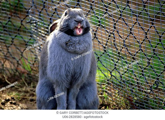 A laughing rabbit