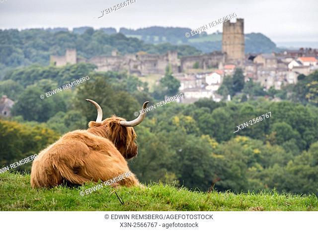 Scottish Highland Cow in Richmond, England, UK