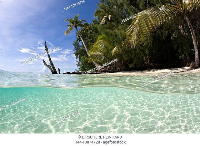 Lagune und Palmenstrand, Mikronesien, Palau, Lagoon and Palm-lined beach, Micronesia, Palau