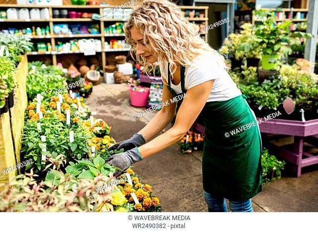 Female florist checking flower