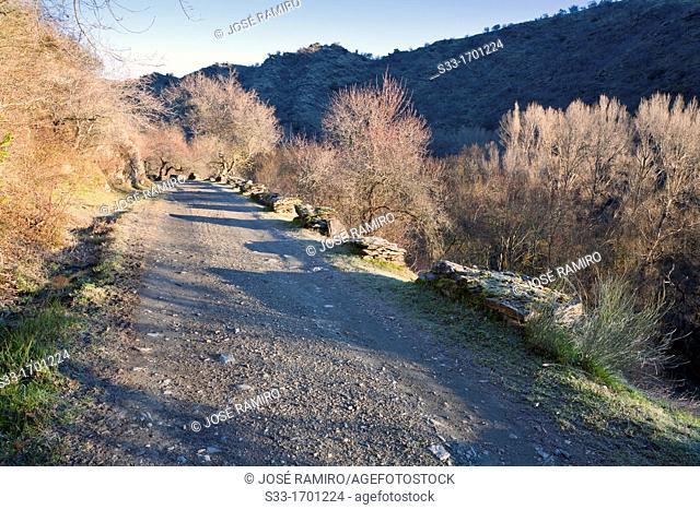 The Canal de la Parra road in the Lozoya gorge  Sierra Norte  Patones  Madrid  Spain
