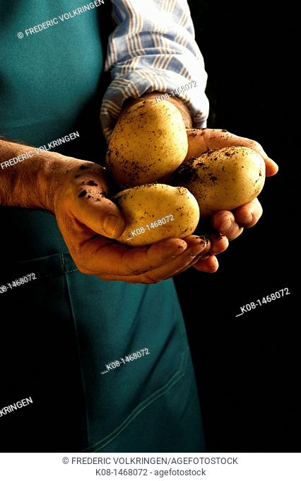 Potatoes, food, gardener, vegetables, hands