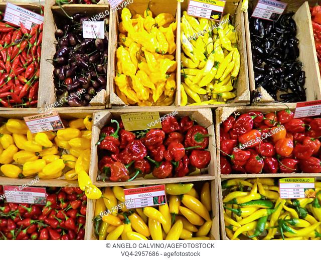 Exposition of international chilli peppers