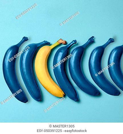 Creativity, creative thinking, ideas concept with blue bananas and one yellow banana on blue background. The concept - not like everyone else or concept...