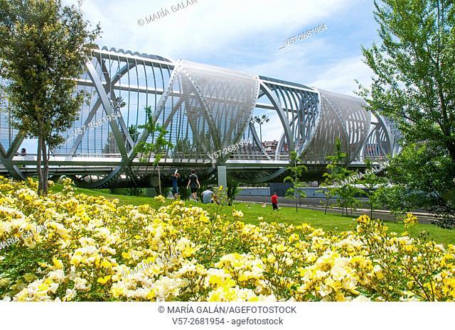 Yellow flowers and Perrault bridge. Madrid Rio park, Madrid, Spain