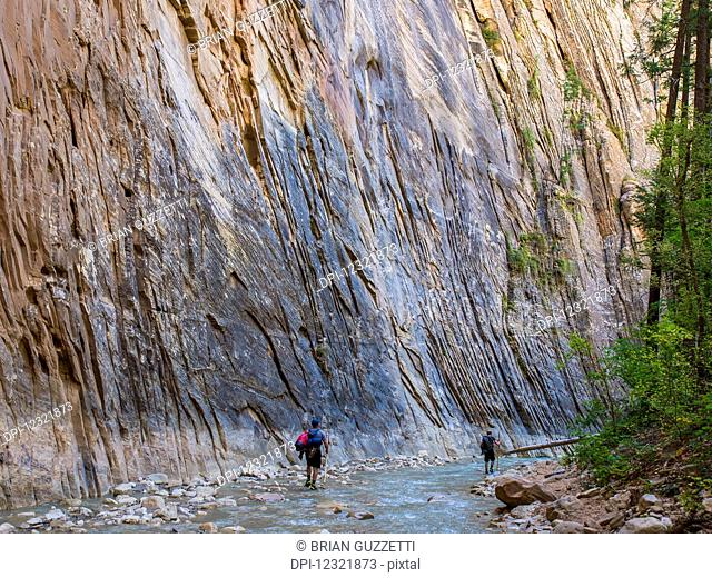 Hikers make their way through the Virgin River Narrows, a majestic portion of one of America's most famous national treasures, Zion National Park; Utah