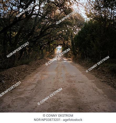 A dirt road in Texas. USA