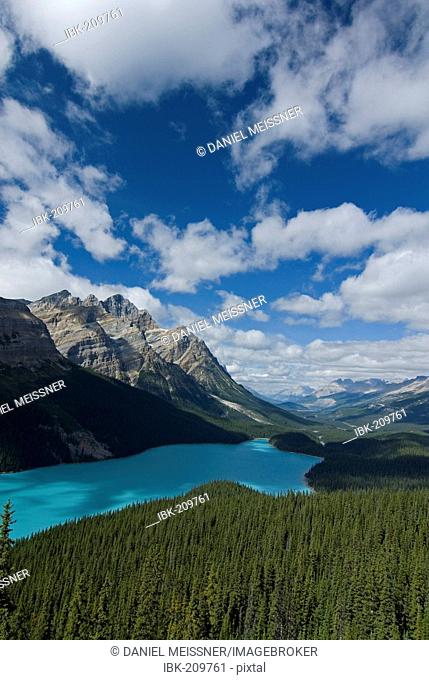 View of the wooded shoreline of Peyto Lake and Bow Valley with Mount Patterson in the background, Waputik Mountains, Banff National Park, Alberta, Canada
