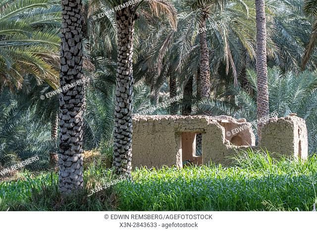 Broken down stone structure amongst date palm trees in Birkat Al Mouz in Oman