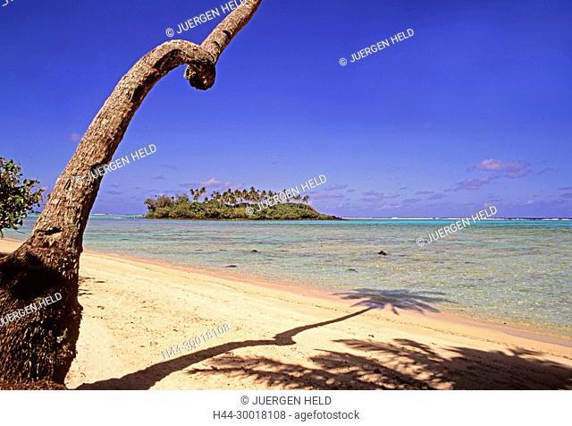 outh pacific, Cook Islands, Raratonga, Muri beach, palm tree Cook Islands, Raratonga, Muri beach, South Pacific