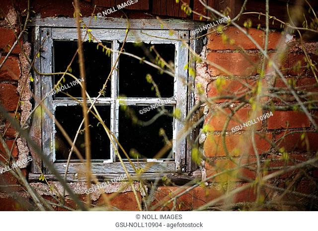 Old Window and Brick Wall With Overgrown Branches