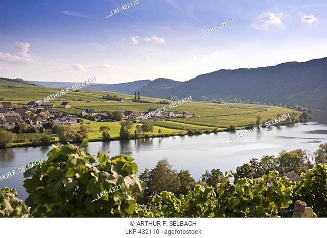 View of the Moselle river near Piesport, Piesport, Rheinland-Pfalz, Germany