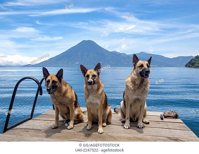 Guatemala, Lake Atitlan, Jaibalito, German shepherds sitting on dock