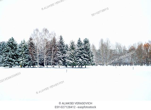 Winter snowy landscape. Winter park with fir trees covered by snow