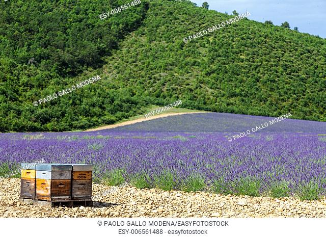 Provence, South France. Beehive dedicated to lavander honey production