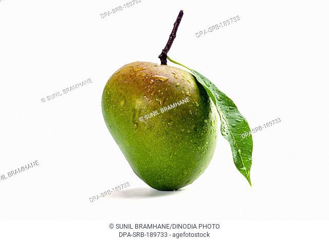 green Mango fruit on white background India Asia