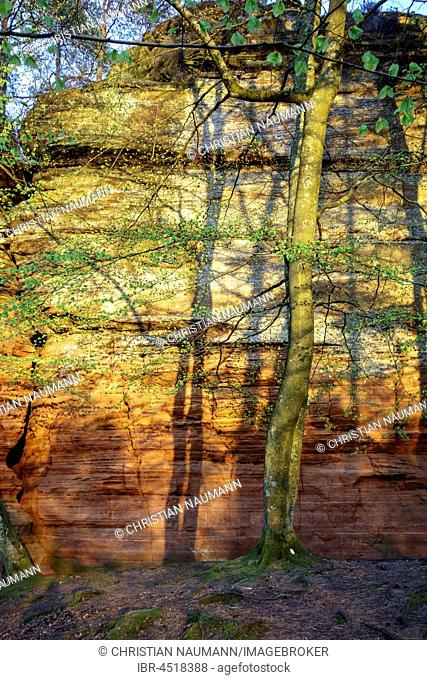 Altschlossfelsen, sandstone, Eppenbrunn, Rhineland-Palatinate, Germany