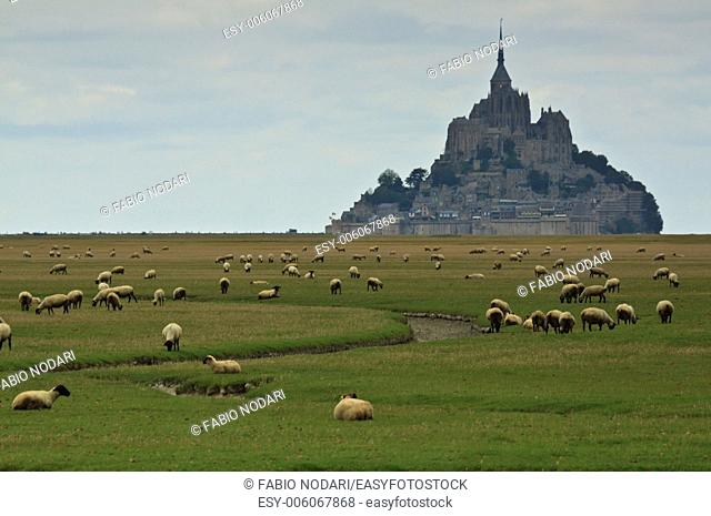 Mont Saint Michel and sheep