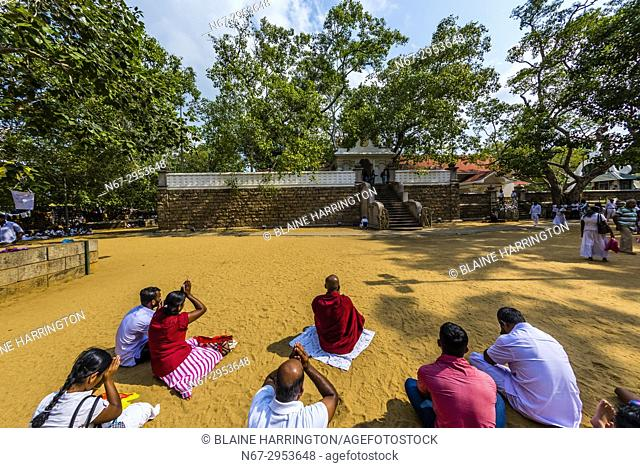 Sri Maha Bodhi, the sacred bodhi tree. . Anuradhapura, North Central, Sri Lanka